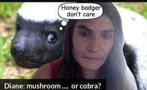 Diane: mushroom ....  or cobra?